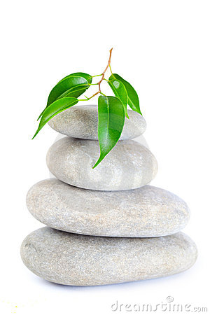 Free Plant On Top Of Pebbles Royalty Free Stock Images - 11035289