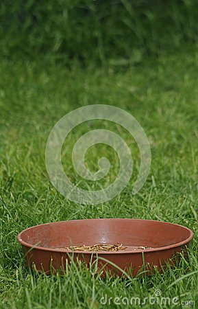 Plant pot saucer with mealworms
