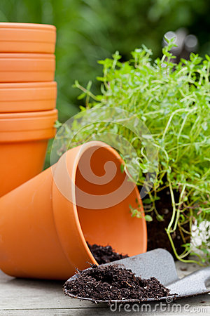 Free Plant Pots Royalty Free Stock Images - 32637579