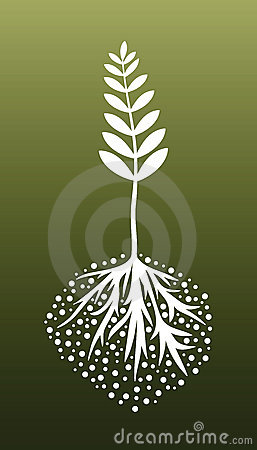 Plant and Roots