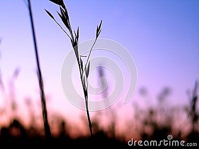 Plant Silhouette 3