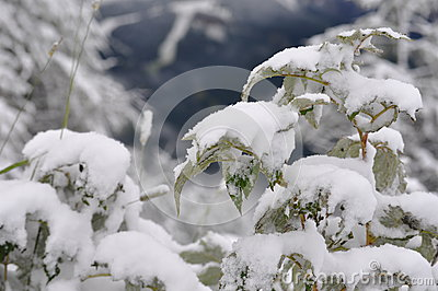 Plant snow