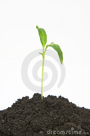Plant sprouting from dirt