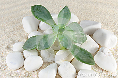 Plant on stones and sands