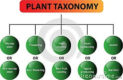 Plant taxonomy diagram - vector