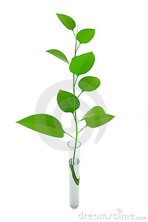 Plant in a test tube