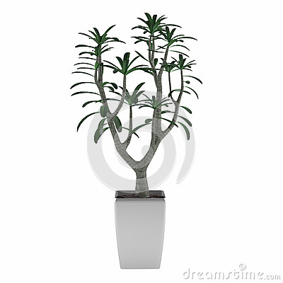 Plant tree pot