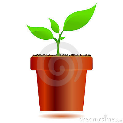 Plant in a vase