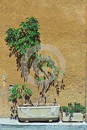 Plant and wall
