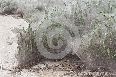 Plant in web