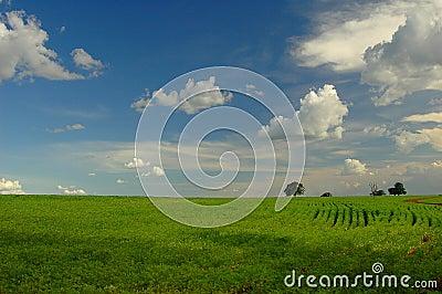 Plantação da soja