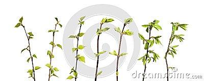 Planta aislada
