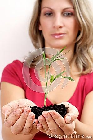 Planta da terra arrendada