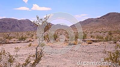 Planta de desierto salvaje sobre las montañas y el fondo del cielo de la nube almacen de metraje de vídeo