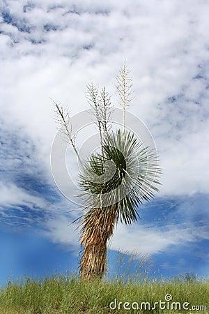 Planta de la yuca