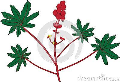 Planta de petróleo de echador (Ricinus communis)