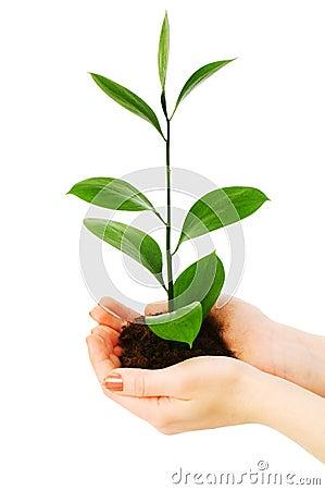 Planta de semillero verde