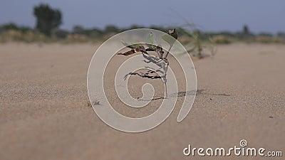 Planta en desierto almacen de video