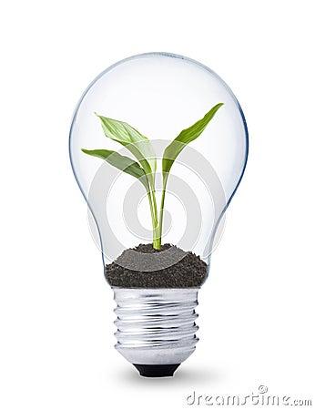 Planta que crece dentro de una bombilla