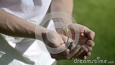 Planta que cresce nas mãos video estoque
