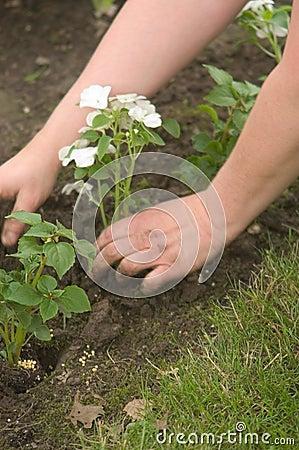 Plantando as mãos