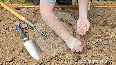Plantando sementes em um jardim video estoque