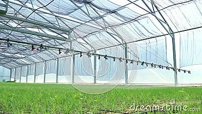 Plantas de irrigação molhando da máquina na estufa Equipamento agricultural filme