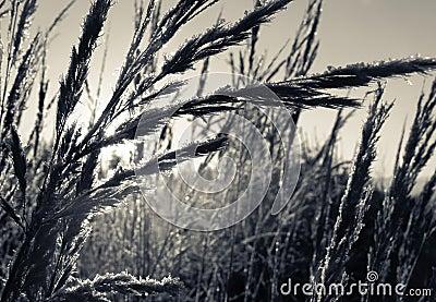Plantas de la hierba