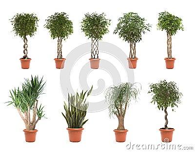 Plantas de potenciômetro