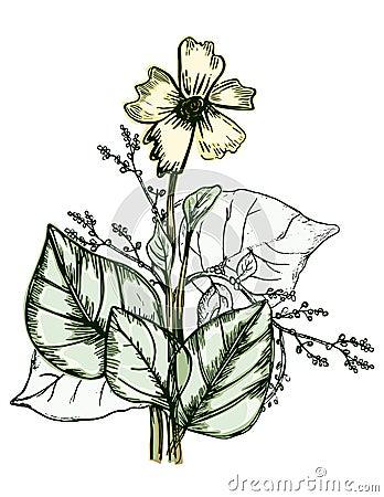 Plantas incompletas