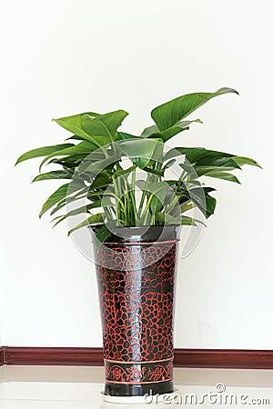Im genes de archivo libres de regal as las plantas - Plantas ornamentales de interior ...
