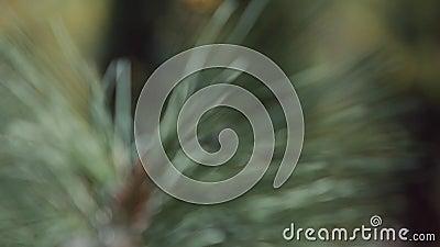 Plantas que crecen en un jardín botánico almacen de video