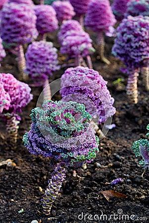 Plantas roxas fotografia de stock imagem 6170572 for Solo piante