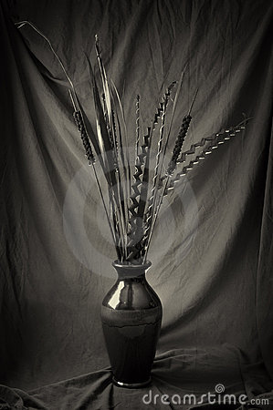 Plantas secadas no vaso