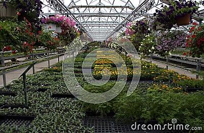Plantas y flores de invernadero para la venta fotos de for Plantas para invernadero