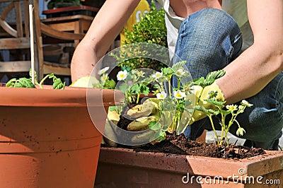 Plantation des fleurs dans le jardin