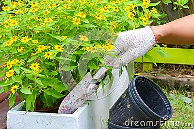Plantation des fleurs dans un jardin photo stock image for Plantation de fleurs