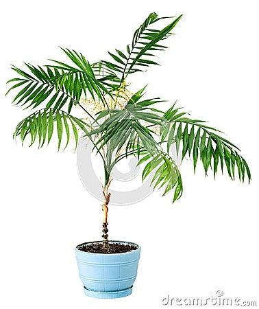Plante d 39 int rieur d 39 isolement photo stock image 38891802 - Plante interieur photo ...