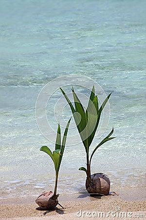 plante de noix de coco photo stock image 19122100