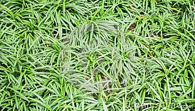 Plante Tropicale Verte Dans Le Jardin Photo Stock Image