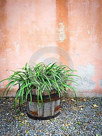 Plante verte dans l 39 ext rieur de d coration de maison de for Plante verte exterieur