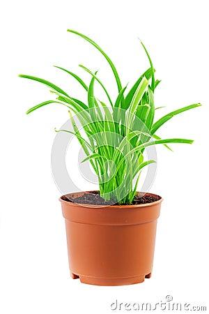 plante verte dans un pot photographie stock libre de droits image 38133377. Black Bedroom Furniture Sets. Home Design Ideas