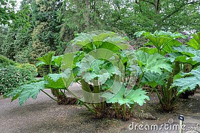 Plante verte exotique images stock image 19685684 for Plante grande feuille verte