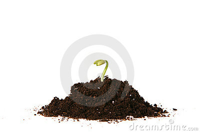 Planted Seed Sprouting