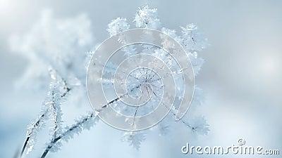 Planten in de sneeuw stock footage