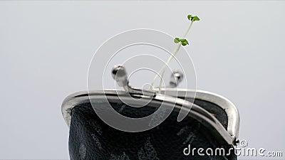 Planten die groeien uit portemonnee, 'Money growth concept' stock footage