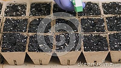 Plantera och bevattna frö i små krukor med en jordning arkivfilmer