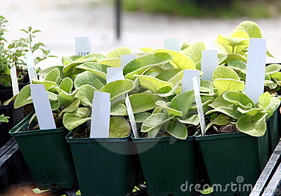 Planterar försäljning