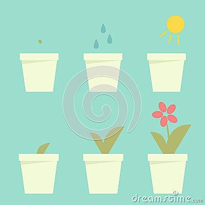 Planting flower info graphic