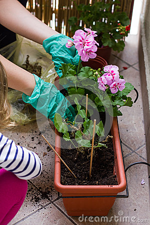 Closeup of mother and daughter together planting flowers